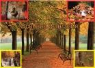 Осенняя прогулка_1