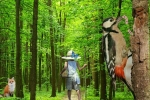 Прогулка в лесу_1